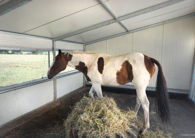 Mobilstall Regio: Innenansicht eines Pferdestalls