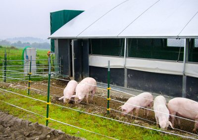Mobilstall Rundbogen: Weidehaltung von Schweinen.