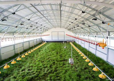Mobilstall Rundbogen: Gesundes Wachstum durch eine natürliche Querlüftung und direkten Bodenkontakt.